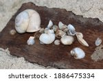 Group With Various Shapes And...