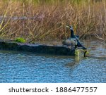 A Side View Of A Cormorant...