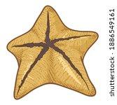 vector cartoon yellow starfish...   Shutterstock .eps vector #1886549161