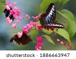 Butterflies' Special Place In...
