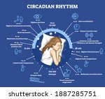 circadian rhythm as educational ... | Shutterstock .eps vector #1887285751