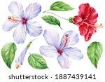 Set Of Hibiscus Flower  Leaf ...