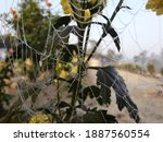 spider web with waterdrops and...   Shutterstock . vector #1887560554