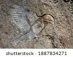 Bold Bird Carved In A Rock