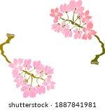 branch of cherry blossom on... | Shutterstock .eps vector #1887841981
