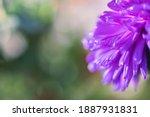 Violet Purple Flower Petals...