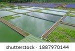 Freshwater Fish Farming Pond In ...