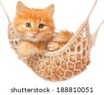 Stock photo cute red haired kitten lay in hammock on a white background 188810051