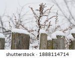 Snow Covered Dry Grass Near A...