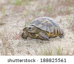 spur thighed tortoise or greek... | Shutterstock . vector #188825561