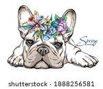 Cute French Bulldog Puppy In A...