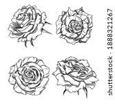 roses hand drawn illustration....   Shutterstock .eps vector #1888321267