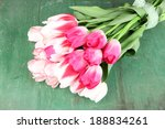 Beautiful Tulips On Color...