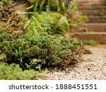 Fresh Green Clump Of Mosses ...
