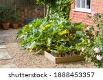 Small photo of Vegetables (courgette plants and beetroot) growing in a raised bed in a UK garden in summer.
