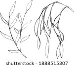 willow ink sketches. simple...   Shutterstock .eps vector #1888515307