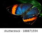 butterfly | Shutterstock . vector #188871554