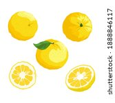 yuzu slice  half cut yuzu and...   Shutterstock .eps vector #1888846117