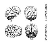 a set of brains in four angles... | Shutterstock .eps vector #1889056801
