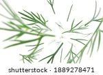 green sprigs of dill levitate... | Shutterstock . vector #1889278471