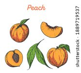 Peach Hand Drawn Vector...