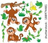 Monkey Theme Collection 1  ...