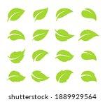 simple flat green leaf design...   Shutterstock .eps vector #1889929564