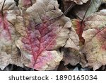 A Pile Of Maple Leaves That...