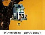 Sparrows feeding   bird feeder...