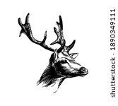 deer head. graphic ink drawing... | Shutterstock .eps vector #1890349111