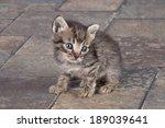 cat | Shutterstock . vector #189039641