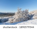 Snowy Trees And Blue Sky