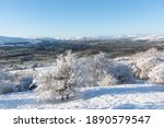 Snowy Trees And View Of...
