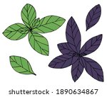 green and purple basil hand... | Shutterstock .eps vector #1890634867