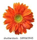 Orange Gerbera Isolated On...