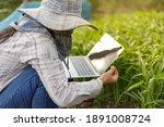 thai farmer is using a laptop...   Shutterstock . vector #1891008724
