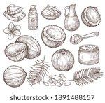 hand drawn coconut. summer... | Shutterstock .eps vector #1891488157