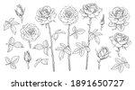 big set of rose flowers  open... | Shutterstock .eps vector #1891650727