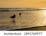 Silhouettes Of Two Seagulls...