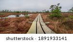 Panoramic View Of Bog With...