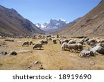 flock of sheep in broad valley  ... | Shutterstock . vector #18919690