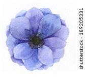 watercolor realistic anemone.... | Shutterstock . vector #189205331