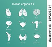 Vector paper-cut  icons with shadows of internal human organs
