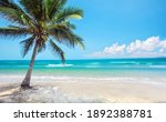 Tropical Beach With Coconut...