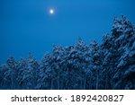Full Moon Winter Night Forest....