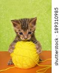 Cute Bengal Kitten On Colorful...