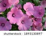 pink flowers in the garden.... | Shutterstock . vector #1893130897