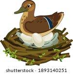 mother wild duck  mallard or... | Shutterstock .eps vector #1893140251