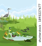 Pond biotope with different animals (bird, reptile, amphibians) in their natural habitat