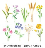 wild flowers and herbaceous...   Shutterstock .eps vector #1893472591